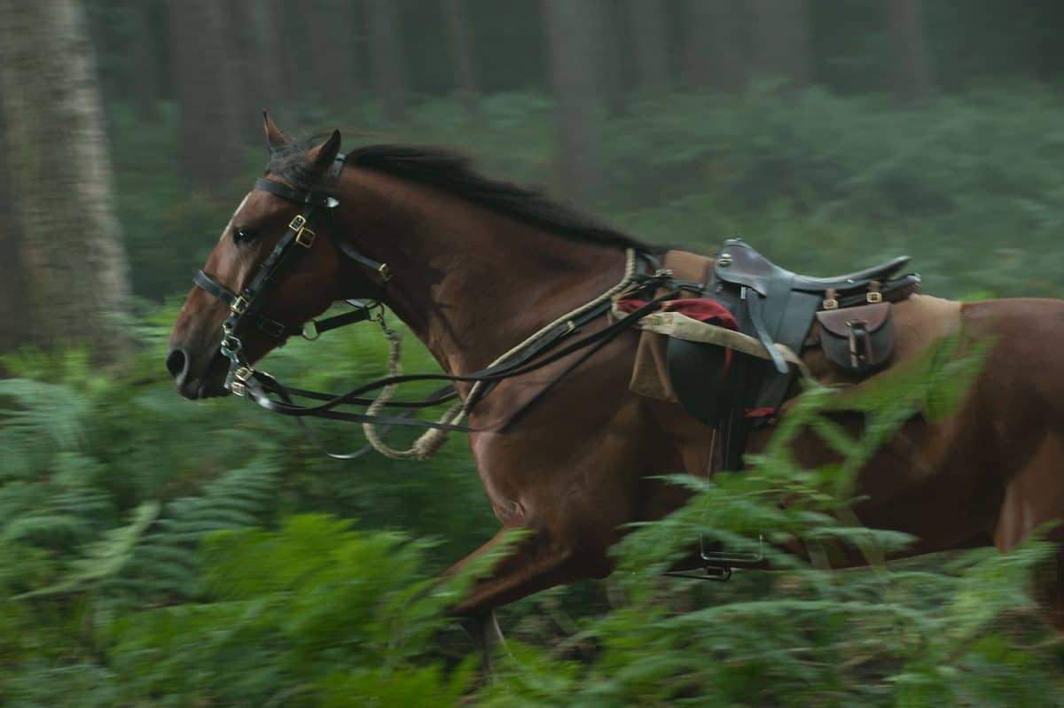 """WAR HORSE""  339_DM-D9-0044R  Ph: David Appleby  ©DreamWorks II Distribution Co., LLC. ÊAll Rights Reserved."