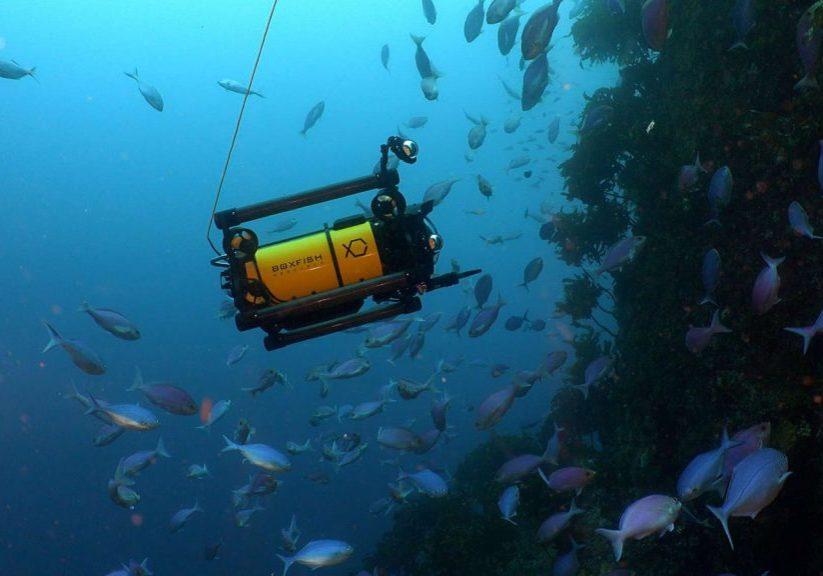 Cinematography-Boxfish-Underwater_2