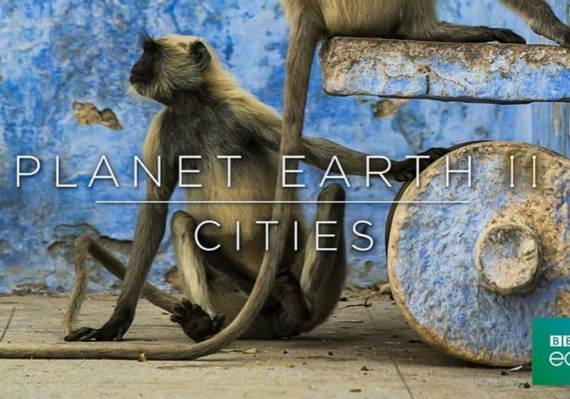 Planet Earth Cities